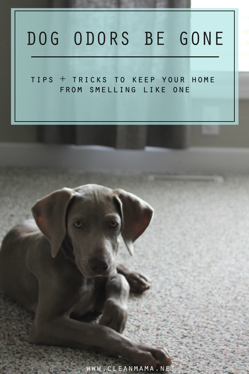 dog-odors-be-gone-tips-and-tricks-to-keep-your-home-from-smelling-like-one-clean-mama